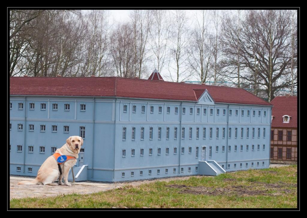 Foto: Labrador Retriever Mexx sitzt an der Rückseite des blaugrauen Frauengefängnisses. Das Modell ist ca. doppelt so hoch wie Mexx.