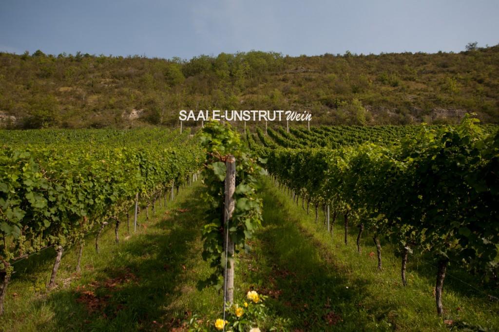 Blick in die Weinberge - in der Ferne ist hinter den Reben Saale-Unstrut Wein zu lesen.