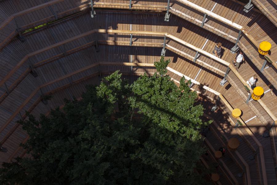 Foto: Blick von oben auf die Buche und Baumwipfelpfad