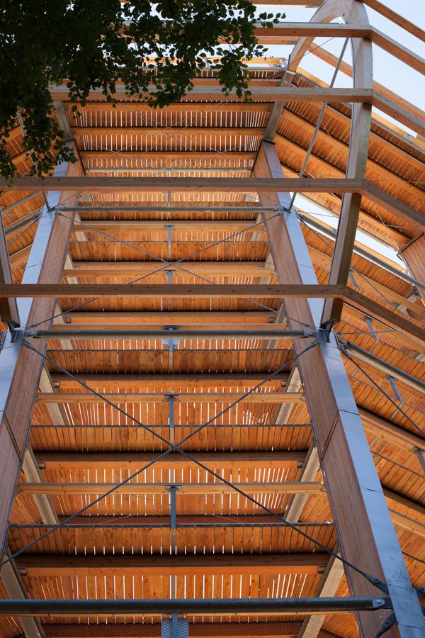 Foto: Blick von unten hinauf zu den Plattformen des Baumwipfelpfades, der sich um die Buche windet
