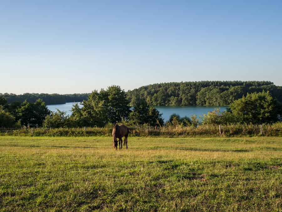 Foto: Blick auf eine Pferdekoppel bei Carwitz. Im Hintergrund der türkisfarbene Schmale Luzin. Im Vordergrund ein auf der saftigen Koppel grasendes Pferd.